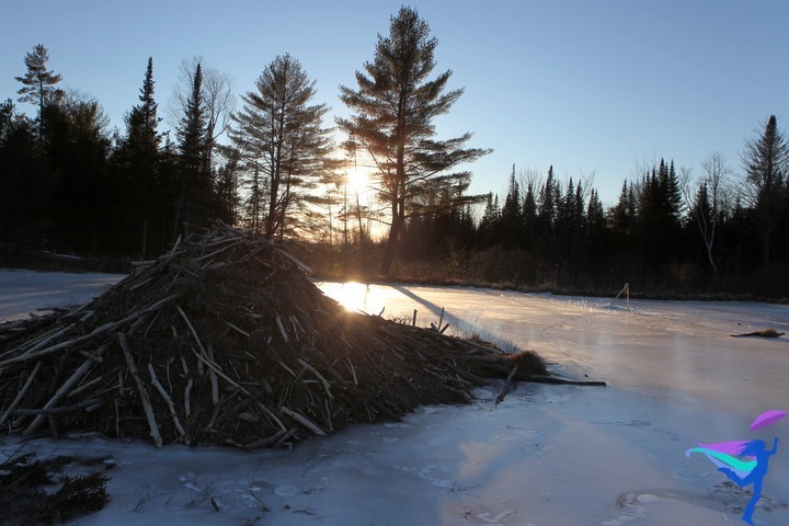 Beaver dam winter Maine