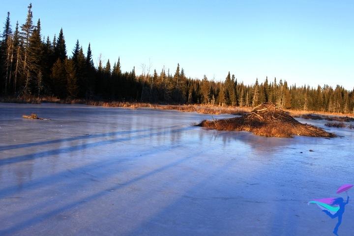 Beaver dam winter Maine