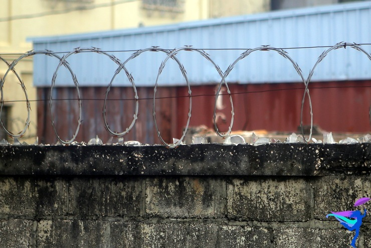 razor wire glass belize