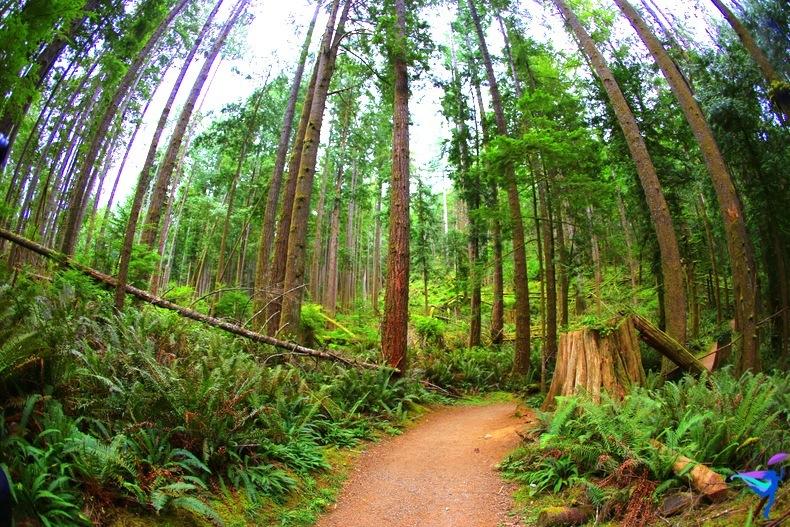 West Coast Wilderness Lodge Vacations Abroad Egmont, British Columbia  Skookumchuck Narrows Provincial Park  forest